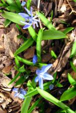 Spring2009_01a