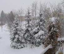 Winter2009_03